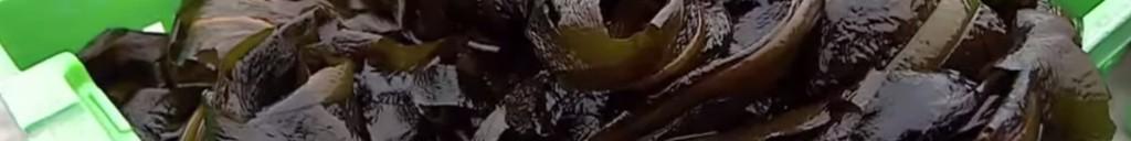 Algues-brunes